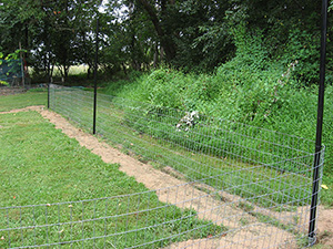 Heavy-duty wire fencing was installed in a one-foot trench.